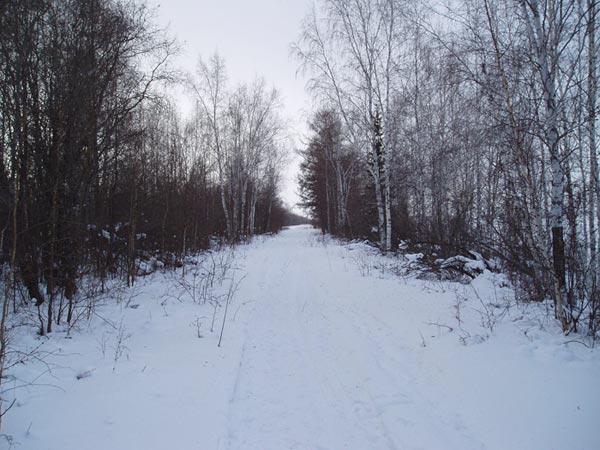 Аллея в лесу