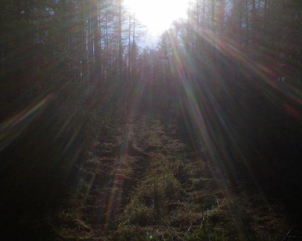Солнечные лучи и тропинка